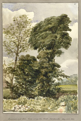 Sycamore and Ash, view across the Moat, Landwade, May 18th1848